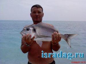 5. Крупный экземпляр рыбы Sparus aurata (дорада)
