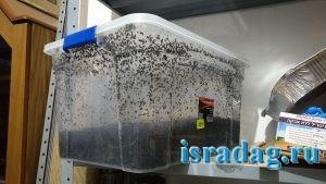 Большой пластиковый ящик в котором я выращиваю дендробену в Израиле