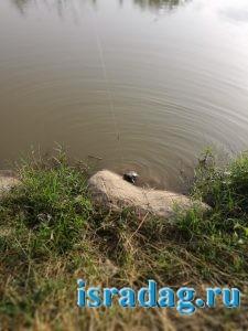 Черепаха клюнувшая на удочку на реке Иордан
