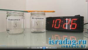 Эксперимент №2. Навозный червь и дендробена на крючке против соленой воды Средиземного моря Израиля