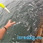 Фото поплавка на оснастке