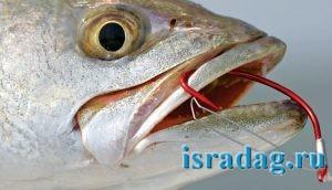Фотография рыболовного крючка в действии