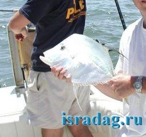 Фотография рыбы бен гурион после поимки