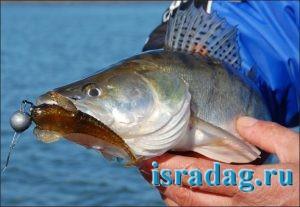 Фотография рыбы с силиконовой приманкой