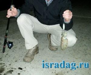Каракатица пойманная в Марине Ашдода в Израиле на китайскую бубу и спиннинг с катушкой за 10 долларов