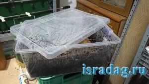 Пластиковый ящик в котором я выращиваю дендробену в Израиле