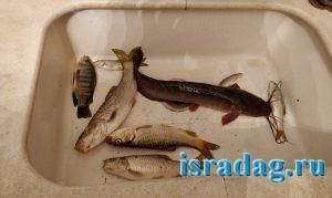 Улов пойманный на реке Иордан